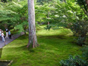 京都大原三千院庭園苔