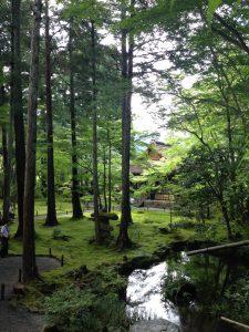 京都大原三千院庭園高い木