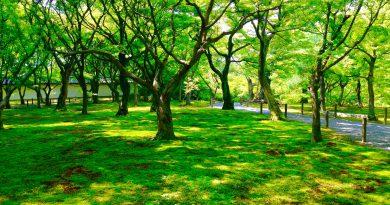 東福寺新緑