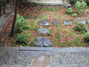 蓮華寺苔と紅葉