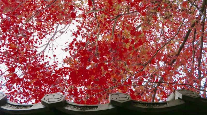 栄摂院紅葉赤い