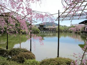 平安神宮桜お花見12