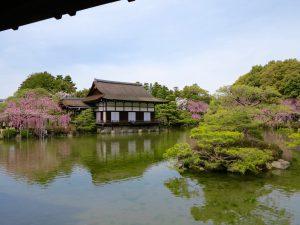 平安神宮桜お花見15