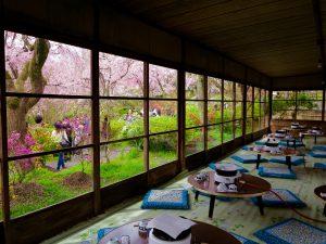原谷苑桜お花見345