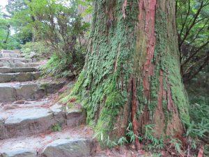 比叡山111