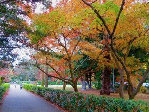 京都御苑34