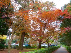 京都御苑33