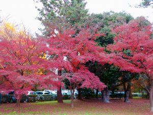 京都御苑23
