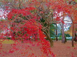 京都御苑18