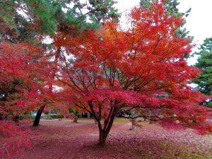 京都御苑17