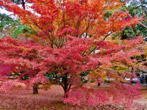 京都御苑14