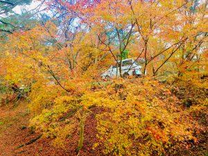 宝ヶ池公園紅葉13