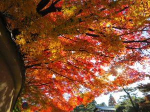 東福寺紅葉25