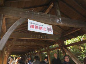 東福寺紅葉21