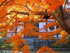 東福寺紅葉16