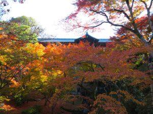 東福寺紅葉14