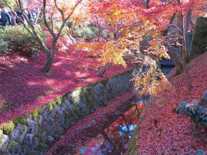 東福寺紅葉12