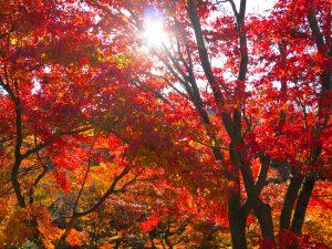 東福寺紅葉9