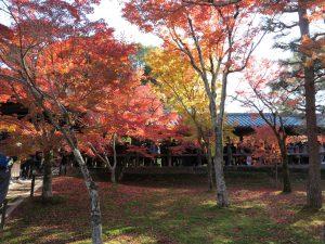 東福寺紅葉8
