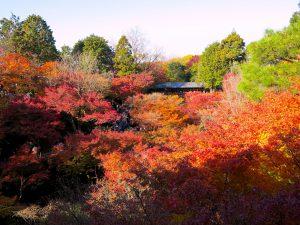 東福寺紅葉5