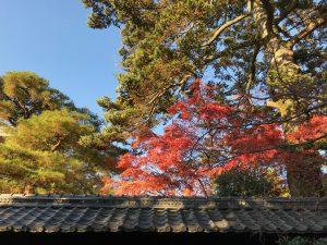 京都御所111