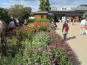 京都府立植物園34