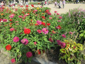京都府立植物園31