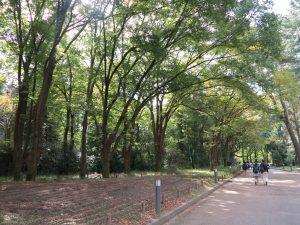 京都府立植物園27
