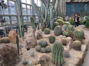 京都府立植物園19