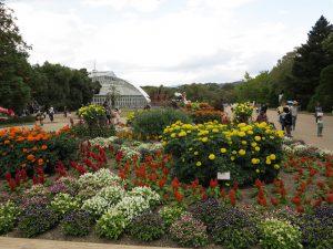 京都府立植物園9