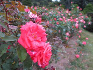 京都府立植物園6