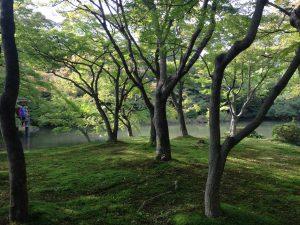 京都府立植物園3