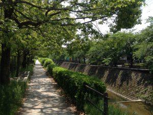 京都岩倉新緑33