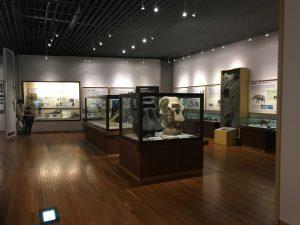 京都大学博物館2