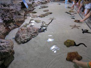 美ら海水族館13