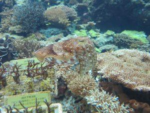 美ら海水族館11