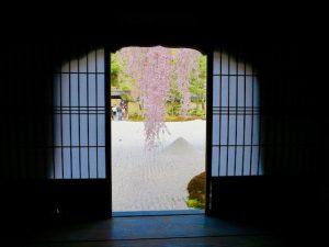 高台寺桜4
