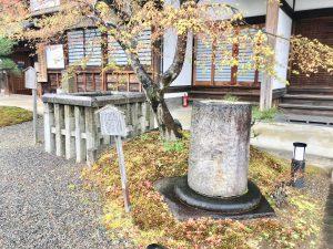 妙満寺桜4